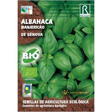 Semillas Ecológicas de Albahaca de Génova bio - Rocalba