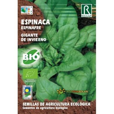 Semillas de Espinaca gigante bio - Rocalba