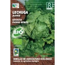 Semillas de Lechuga Batavia bio - Rocalba