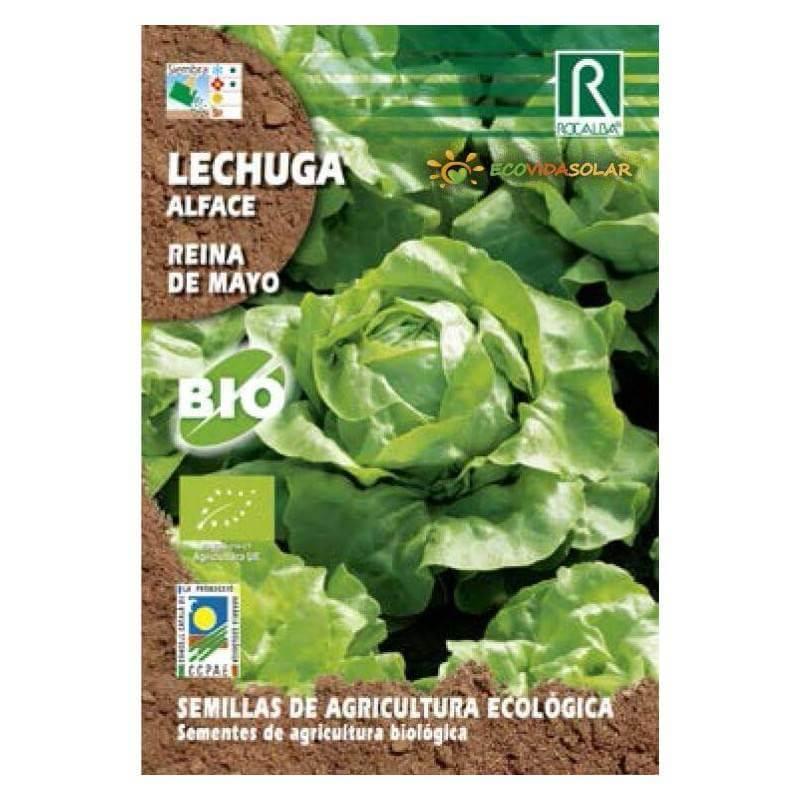 Semillas-lechuga-reina-de-mayo-bio-Rocalba-Ecovidasolar