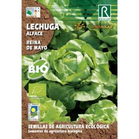 Semillas de lechuga reina de mayo bio - Rocalba