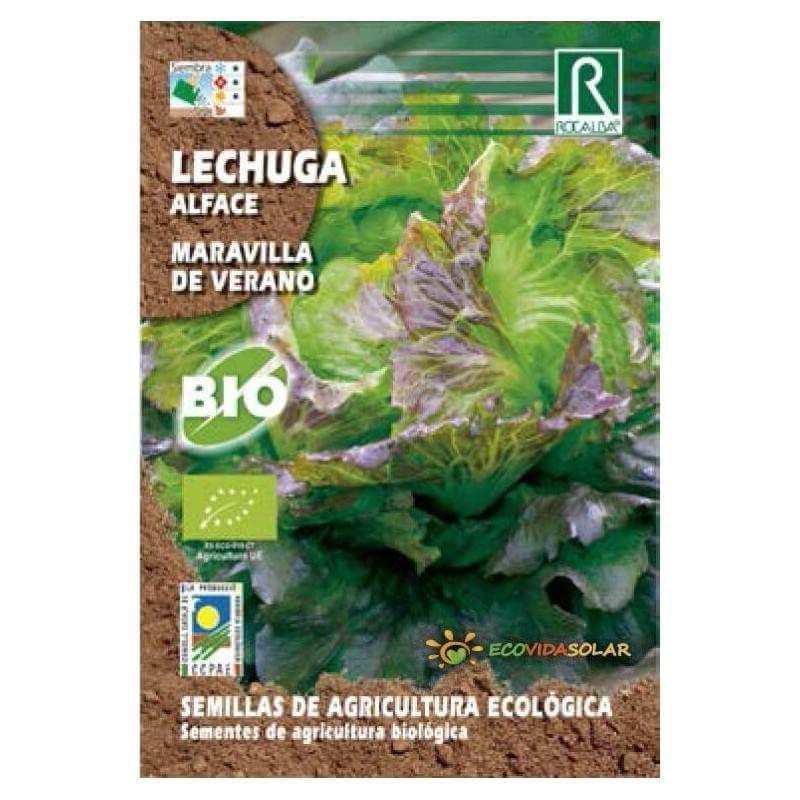 Semillas-lechuga-maravilla-de-verano-bio-Rocalba-Ecovidasolar
