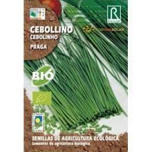 Semillas de cebollino praga bio - Rocalba