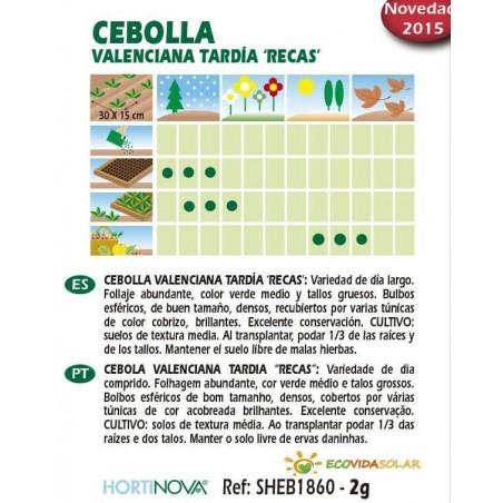 Semillas-cebolla-valenciana-recas-bio-Rocalba-Ecovidasolar