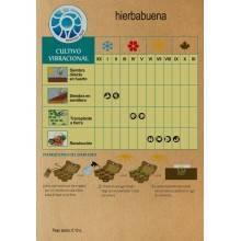 Semillas de hierbabuena - Madre Tierra - Ecovidasolar