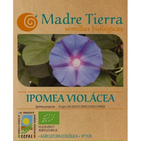 Semillas de Ipomea Violácea - Madre Tierra