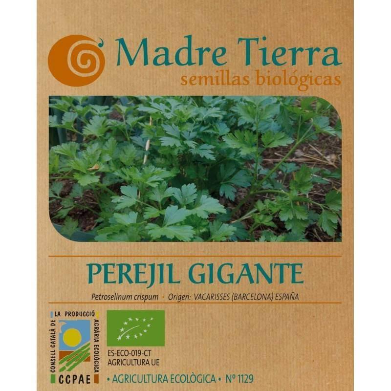 Semillas de perejil gigante - Madre Tierra - Ecovidasolar