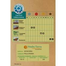 Semillas bio de achicoria - Madre Tierra - Ecovidasolar