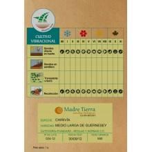 Semillas ecológicas de chirivía - Madre tierra - Ecovidasolar