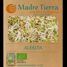 Semillas ecológicas de alfalfa para germinar - Madre Tierra - Ecovidasolar